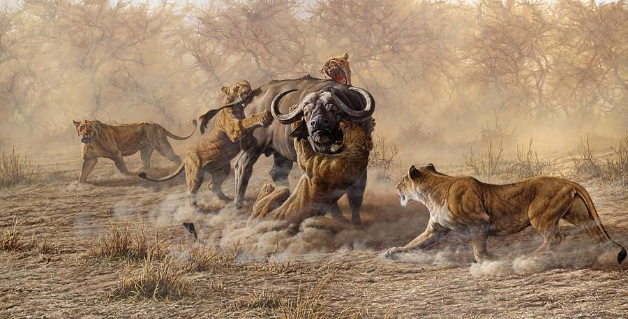 The Take Down Lions Attacking Cape Buffalo By Alan M Hunt In 2020 Wildlife Art Wildlife Paintings Buffalo Art Print