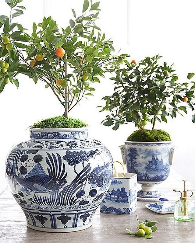 Forget the fiddle-leaf fig. We're all about this mini citrus tree potted in a gorgeous blue-and-white vessel! Link in bio for the simple how to. #OKLStyleTip from @mepflug [