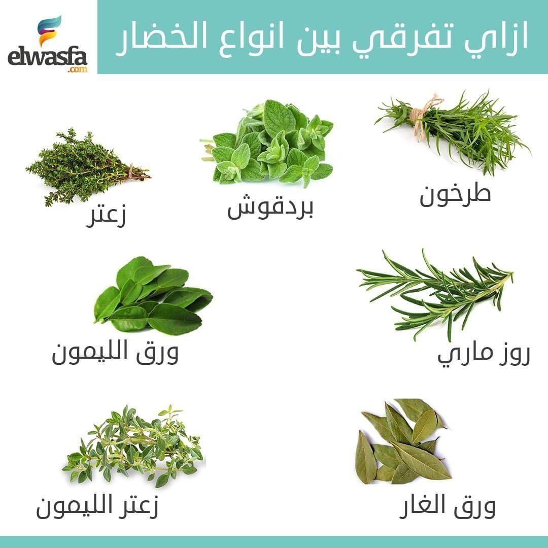 الفرق بين انوع الخضروات الورقية احفظيها عندك ومتنسيش منشن لصحبتك Herbs Spices Meal Planning