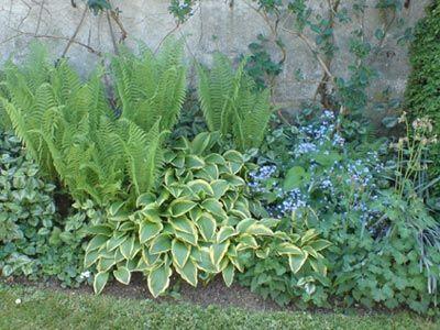 Au pied d\'un mur à l\'ombre (Scènes de jardins) | Jardins | Pinterest ...