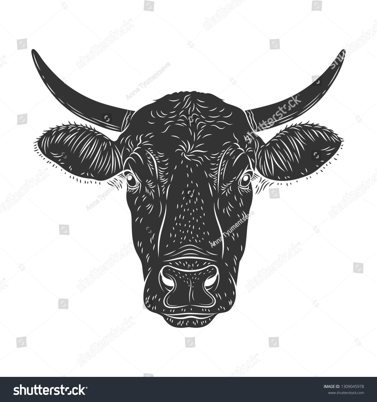 Cow calf bull's head isolated on white background. Cattle