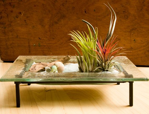 Would Be A Gorgeous Coffee Table.The Fallen Tree   Tillandsia Air Plant  Garden By TheFallenTree On Etsy