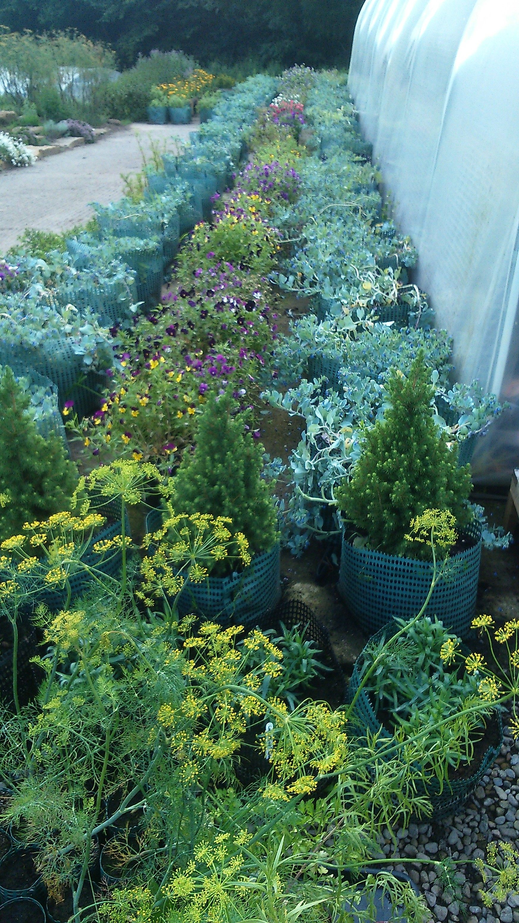 Edible Flowers, The Black Swan Kitchen Garden, Oldstead, Yorkshire ...