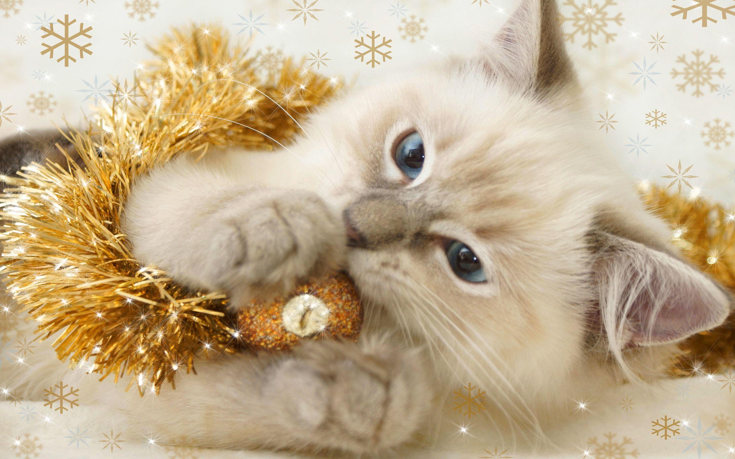 Cute Christmas Kitty Christmas Kitten Christmas Cats Christmas Animals