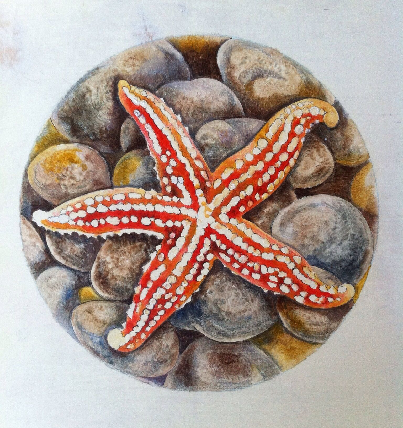 Starfish design - close-up from side of cabinet!