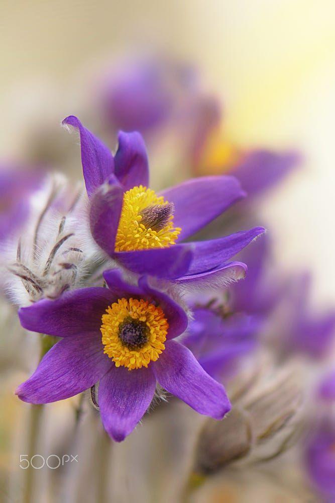 Purple by Mariana Stefanova on 500px