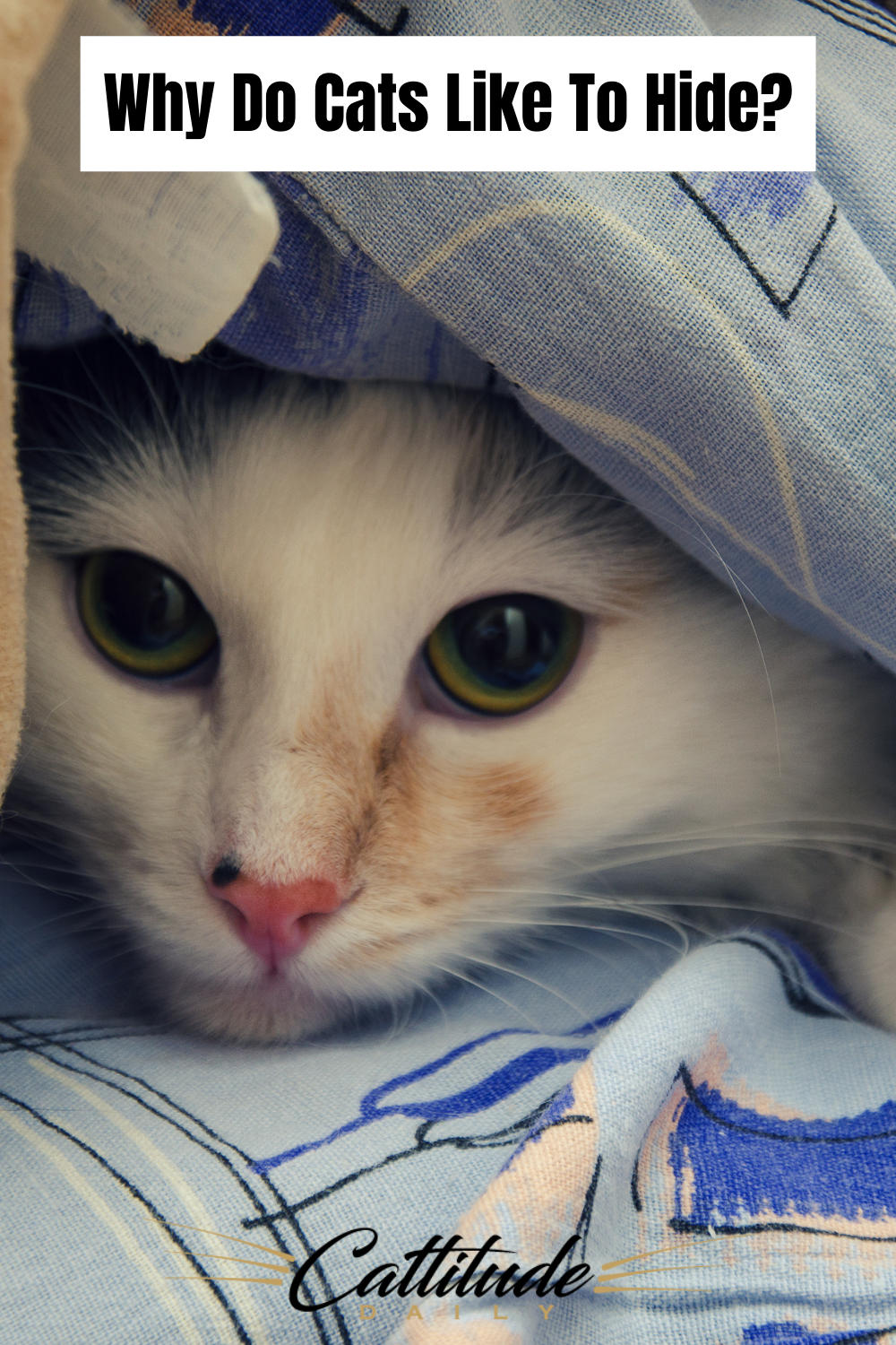 Why Do Cats Like To Hide In 2020 Cats Cat Behavior Cat Facts