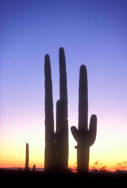 "Best trails to see Saguaro N.P.'s wonders. Learn more about these and other great trails in ""Best Sights to See at America's National Parks"": http://www.amazon.com/Sights-Americas-National-Parks-Hittin-ebook/dp/B018W7Y288"