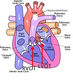 Fetal    Heart    Ultrasouns of Four Chamber View   ultrasound