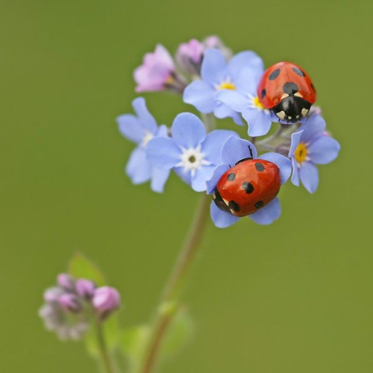 Marienkäfer Auf Blume Bugs Insects Little Creatures