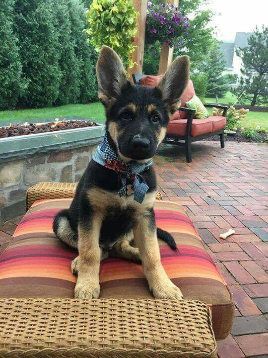 Awesome pup !