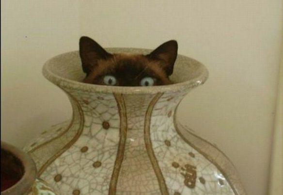 fotos de gatos ocultos - Buscar con Google