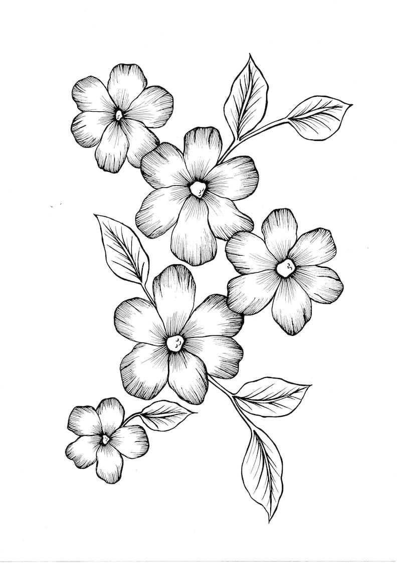 Wild Flowers Pdf Coloring Page In 2021 Flower Art Drawing Flower Pattern Drawing Easy Flower Drawings