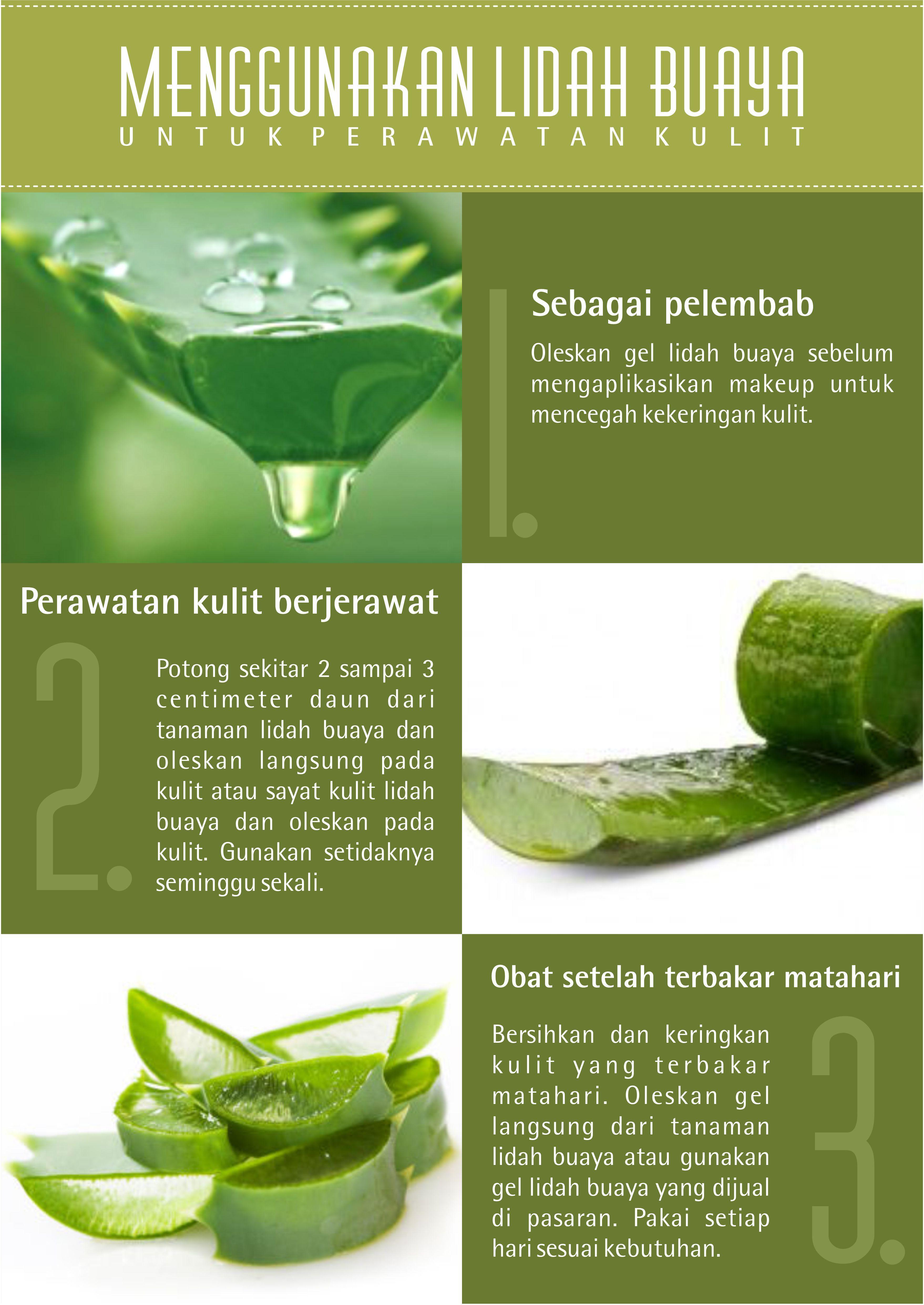 Cara Menggunakan Aloevera Gel Untuk Kulit Berjerawat