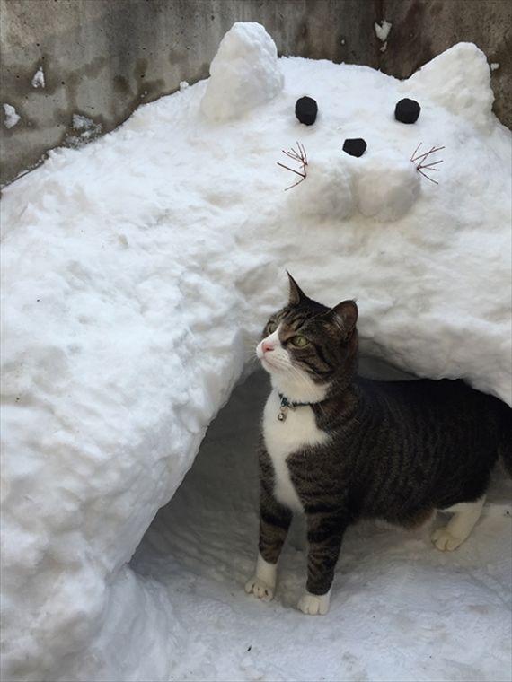 Dis Ma Outside Kitty Hidin Pwace おもしろ猫画像 猫 可愛すぎる動物