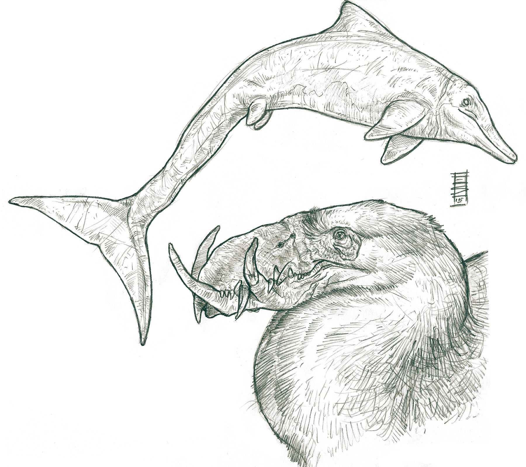 "Old creature sketches inspired by Terryl Whitlatch's ""Science & Principles of Creature Design"". #conceptart #creature #creaturedesign #dolphin #fantasycreature #ichthyosaur #monsters #scifi #sketches #terrorbird #terrylwhitlatch"