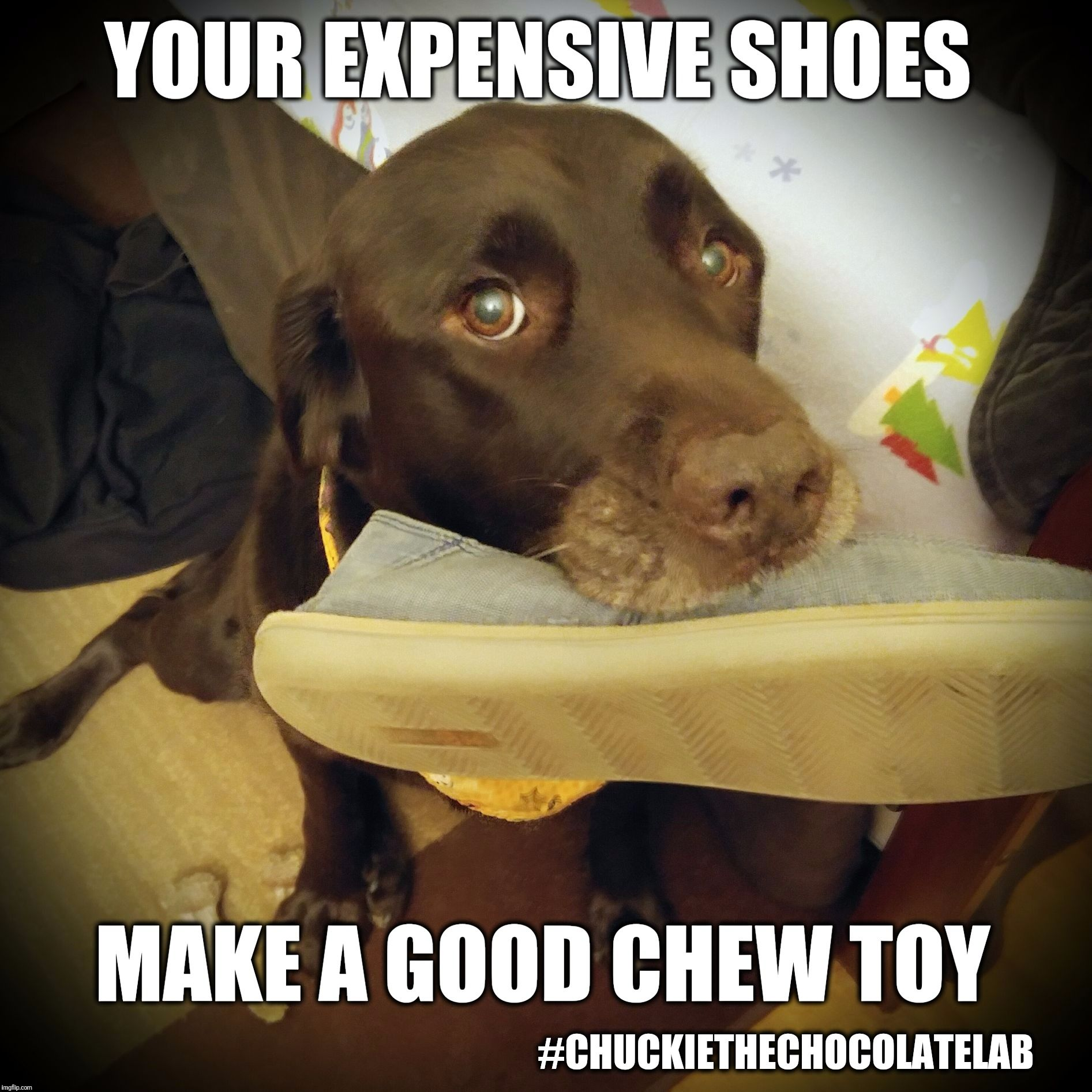 Chuckie The Chocolate Lab Dog Quotes Funny Funny Dog Memes Cute Animal Quotes