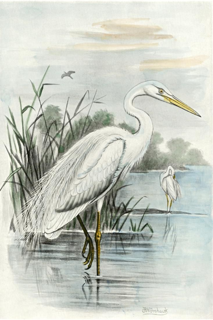 Oversize White Heron Print Wall Art Walmart Com In 2020 Heron Art Art Canvas Wall Art