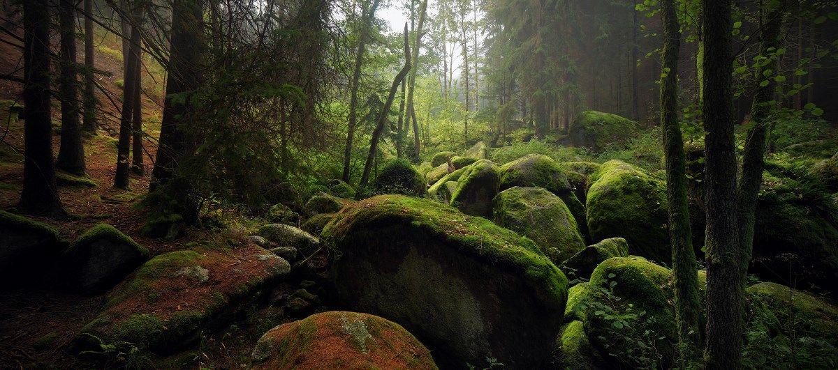 #489 | Troll Forest by Kilian Schoenberger