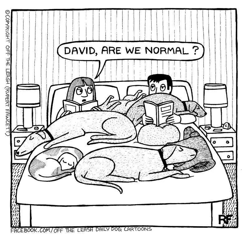 My bed minus David. Haha