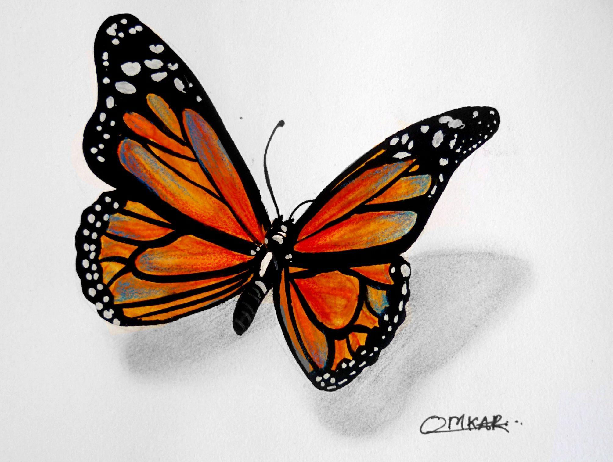 Рисунки карандашом бабочки цветные