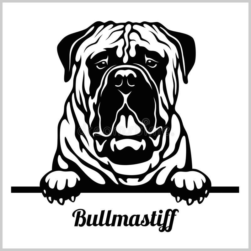 Bullmastiff - Peeking Dogs - Breed Face Head Isola