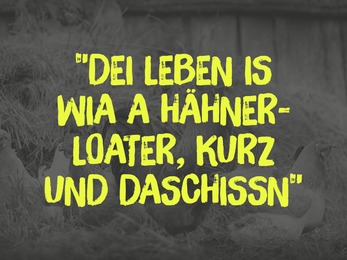 Dei Leben Is Wia A Hahnerloater Kurz Und Daschissn Danke An Den Andy Fia Den Spruch Bayerische Sprichworter Bayerische Spruche Bayrische Spruche Spruche
