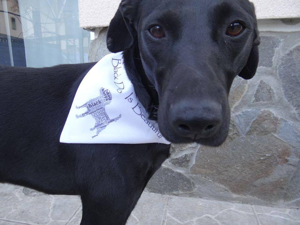 Black Dog Is Beautiful - nyeremény kendő