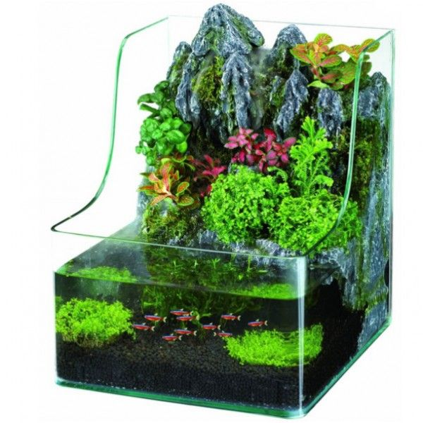 r sultat de recherche d 39 images pour petit aquarium aquarium pinterest petit aquarium. Black Bedroom Furniture Sets. Home Design Ideas