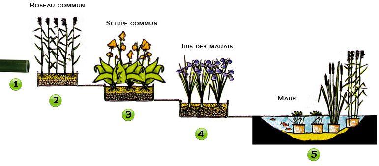 Schéma assainissement écologique Encyclopédie ACQUALYSjpeg maison - assainissement d une maison
