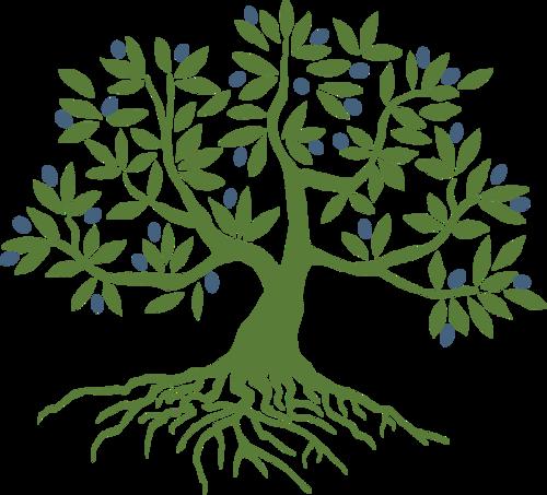 Olivetree Initiative Olivetreeinit Olive Tree Tattoos Tree Drawing Tree Art