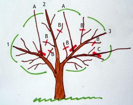 En Este Artículo Explico Paso A Paso La Poda De Formación Fructificación Y Rejuveneci Poda De Arboles Frutales Cultivo De árboles Frutales Limonero En Maceta