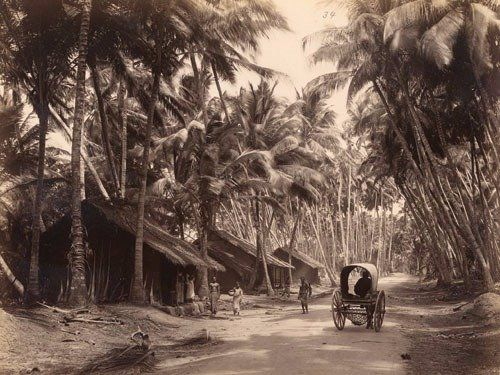 1870s ceylon photograph - Provided by Business Insider