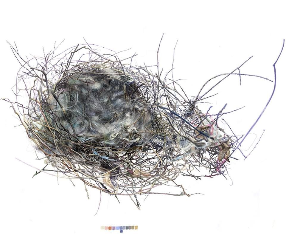 Line Drawing Nest : Stage two of nest drawing and watercolor