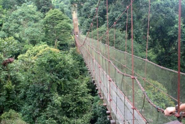 Borneo Rainforest Canopy Walkway Malaysia - Google Search & Borneo Rainforest Canopy Walkway Malaysia - Google Search ...
