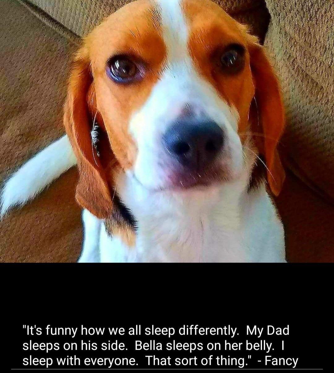 Pin By Mark Whitecotton On Beagle Memes Beagle Puppy Beagle