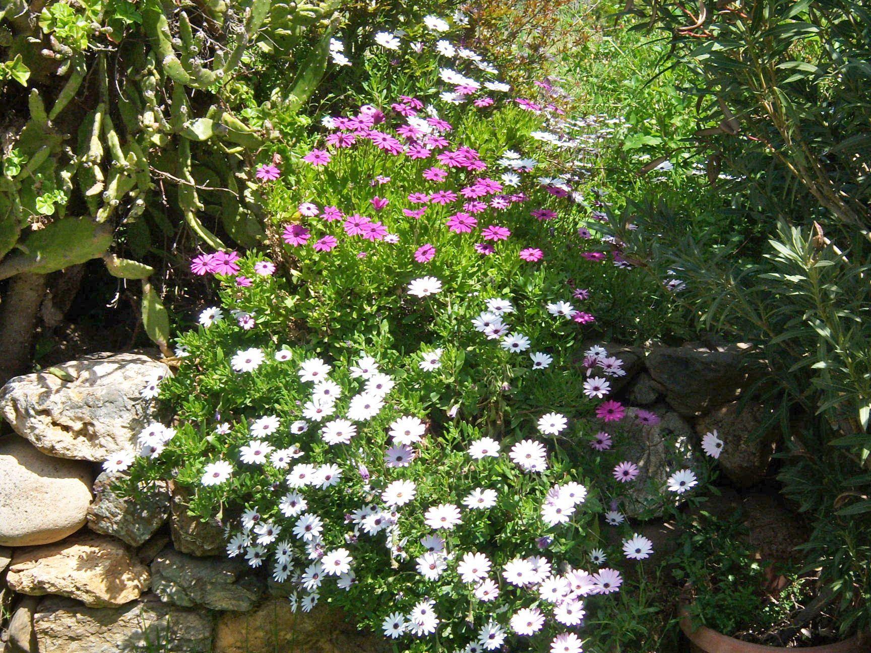 Il mio giardino in primavera il mio giardino giardino primavera