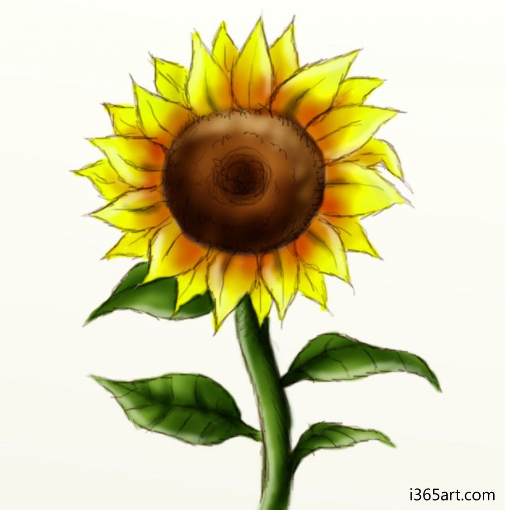 How to draw a sunflower mackenzie pinterest sunflowers and