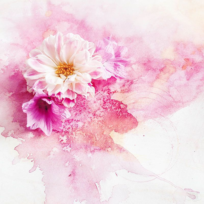 Watercolour Pink Background And Flowers Photography By Georgie St