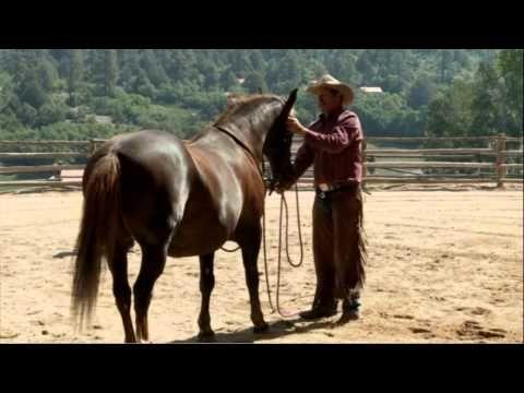 Pat Parelli Bridling Problem Horse Savvy Club Inside Access Dvd