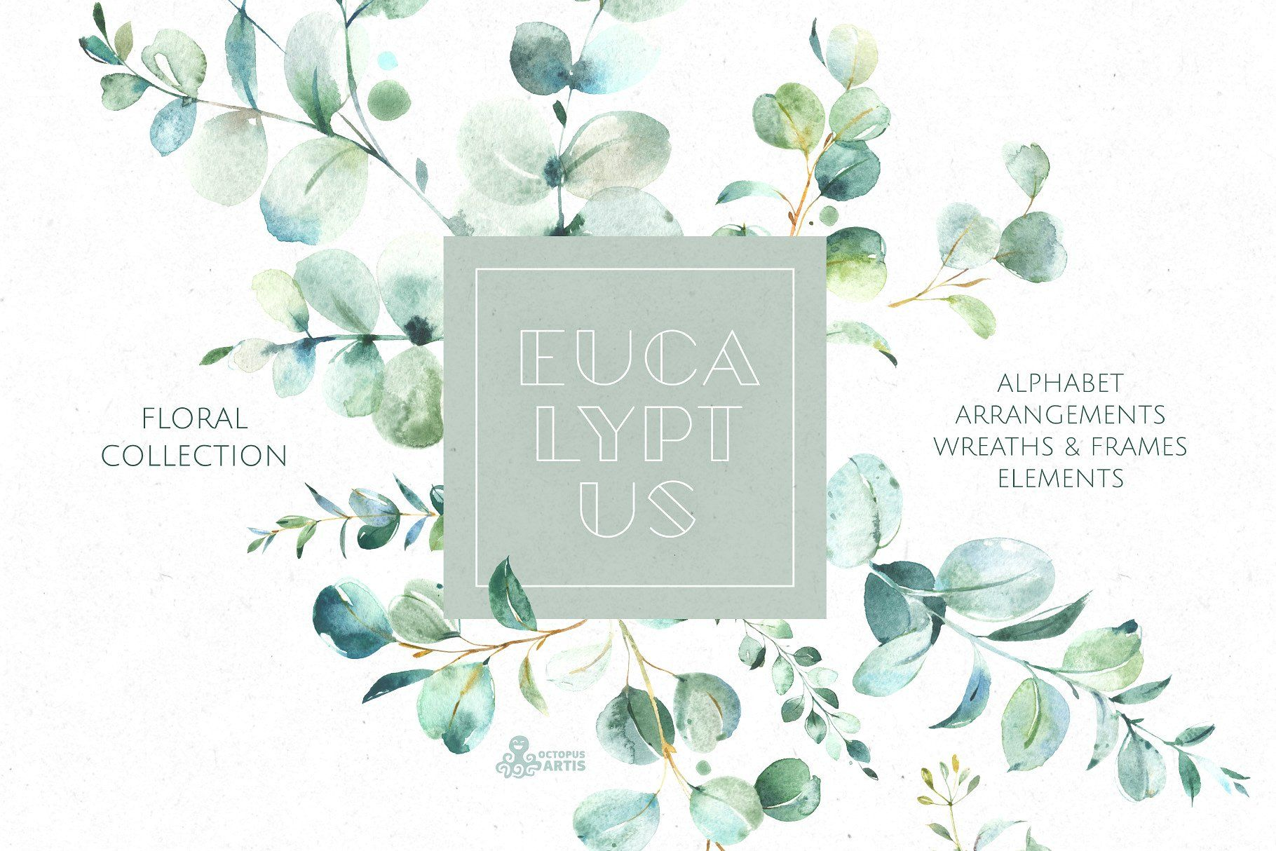 Eucalyptus. Watercolor Collection by OctopusArtis on