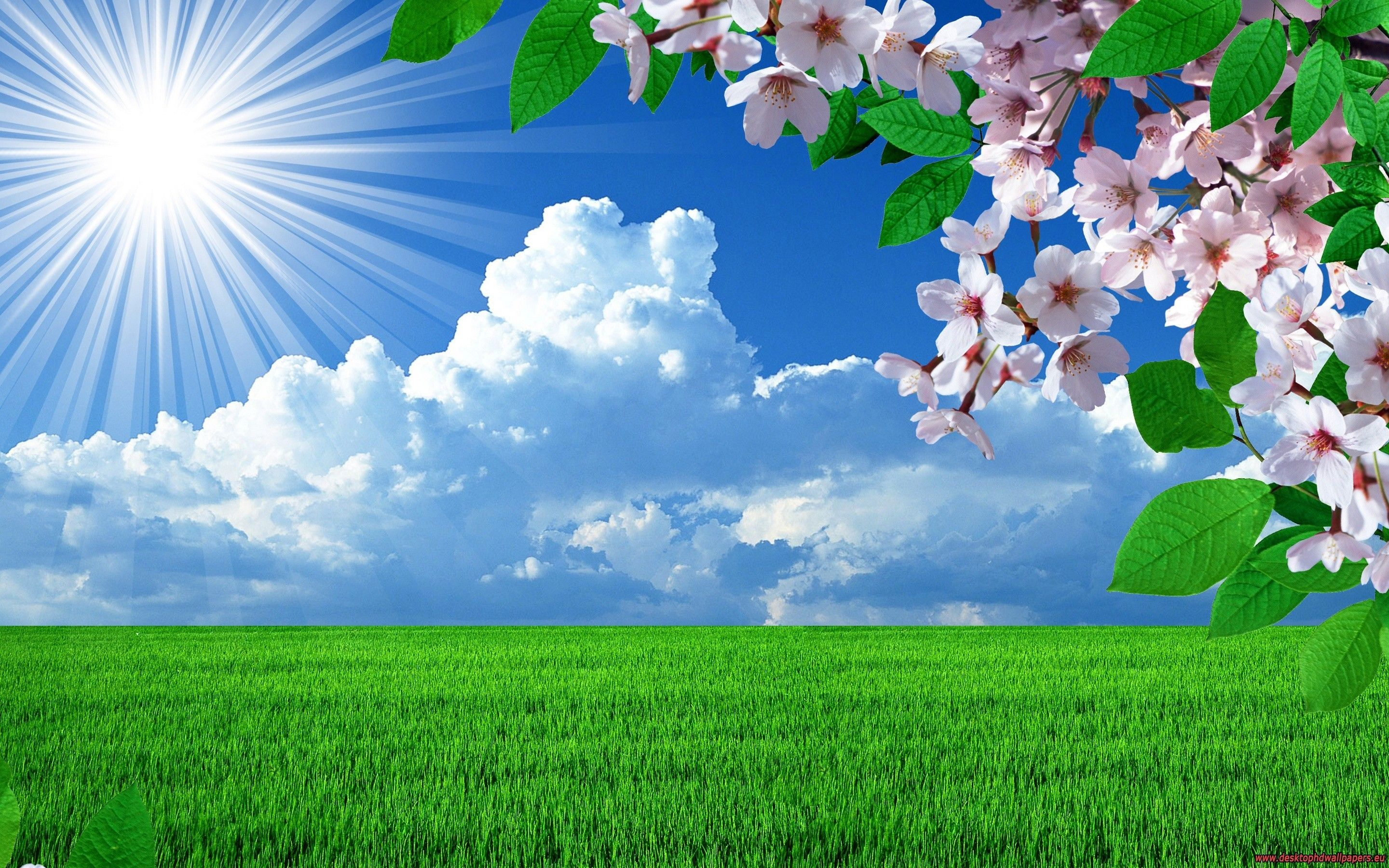 Spring Wallpapers Beautiful Nature Spring Spring Wallpaper Spring Desktop Wallpaper