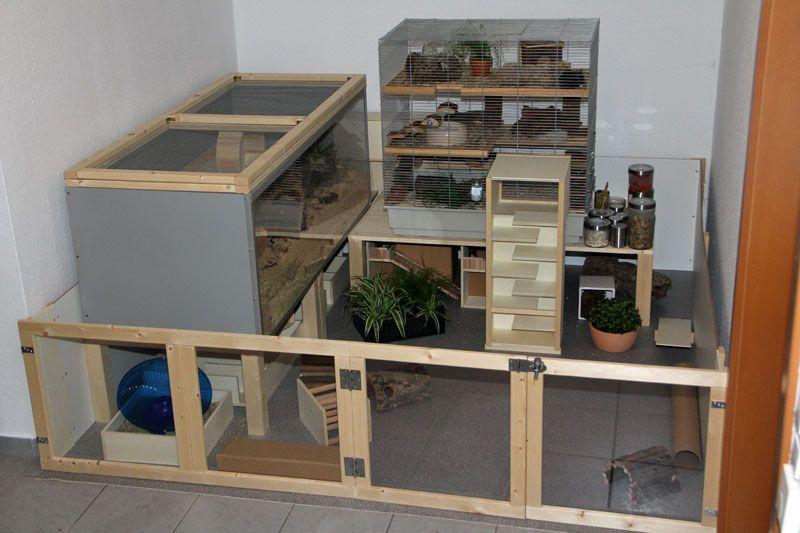Meine Hamsterwelt Permanent Auslauf Ist Fertig Auslaufe Bau Einrichtung Und Vorstellung Hamster Rennmaus Susse Hamster