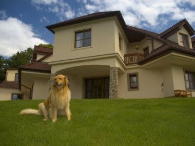 The 2013 International Housewares Association Show Iha Is Coming Up Here Are Some Of The Best New Pet Home Produ Home Selling Tips Selling House Dog Houses