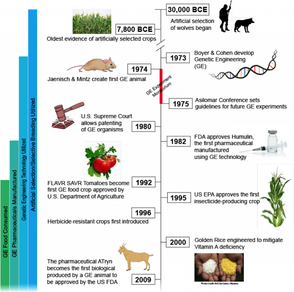 A Short History Of Gmos From Prehistoric Times To Today Science