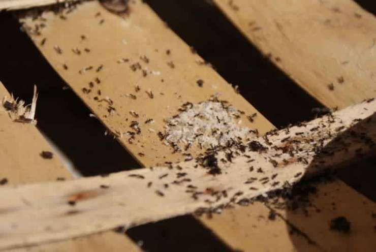 Les 25 meilleures id es de la cat gorie loigner les for Anti fourmi naturel maison
