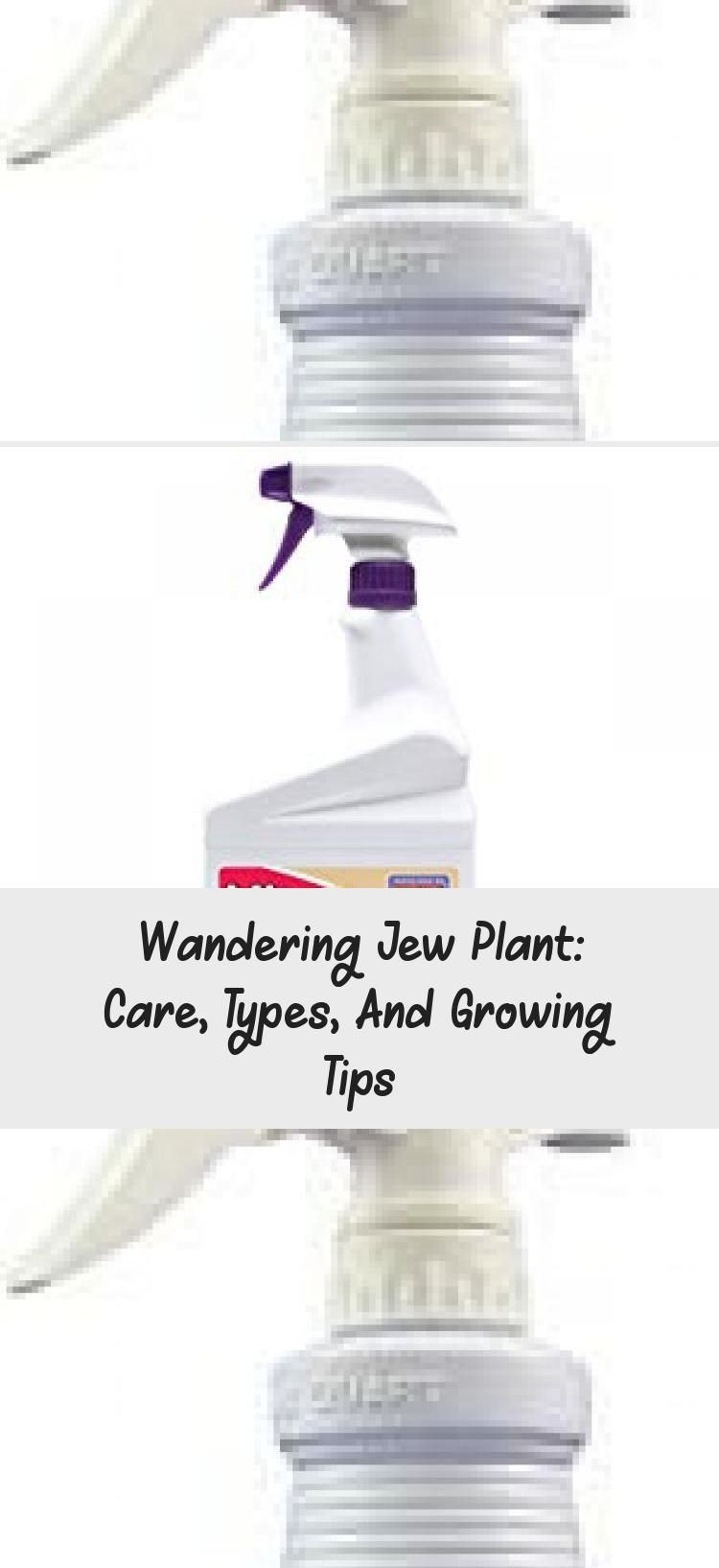 Wandering Jew Plant: Care, Types, And Growing Tips #wanderingjewplant The wandering jew plant is not a single plant — it refers to 3 different types of houseplants! Learn how to grow them in this in-depth care guide. #PlantsFondEcran #PlantsDecoration #PlantsLandscaping #PlantsFlowers #PlantsExterieur #wanderingjewplant