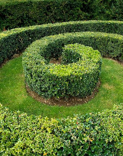 Google Image Result for http://artificialtopiary.myblogs.us/wp-content/uploads/2011/05/4a5e1_spiral_topiary_1472023146_6afc2f6bb4.jpg