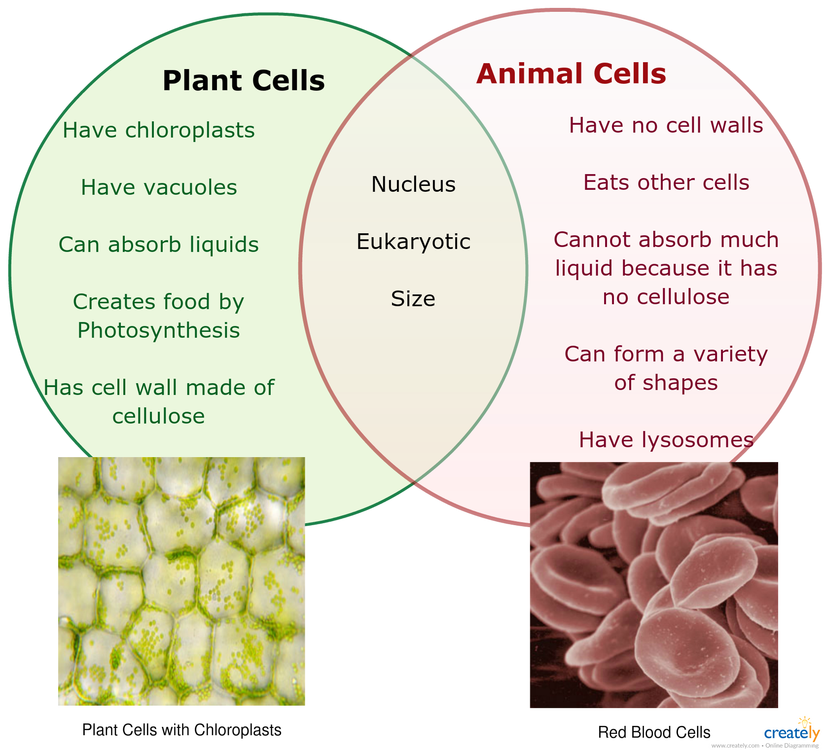 Image Result For Plant And Animal Cell Venn Diagram