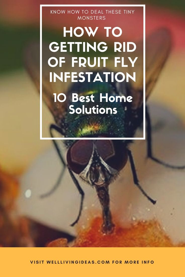 best home solutions for getting rid of fruit fly infestation